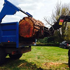 Loading a large tree trunk ont the back of a blue tipper truck