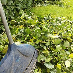 Hedge trimmings ready for clearing